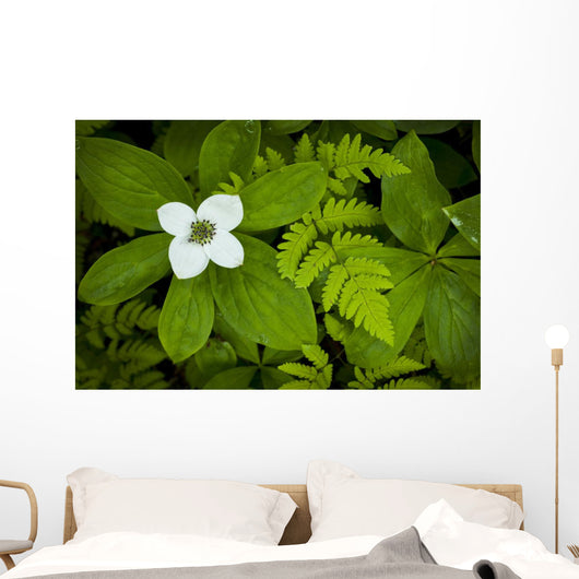 Close Up Of A Dwarf Dogwood Flower Mixed With Ferns Wall Mural