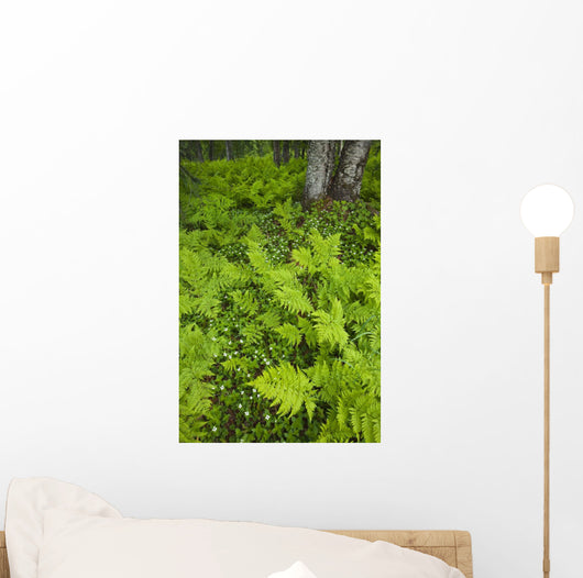 Wood Ferns And Bunch Berry Wall Mural