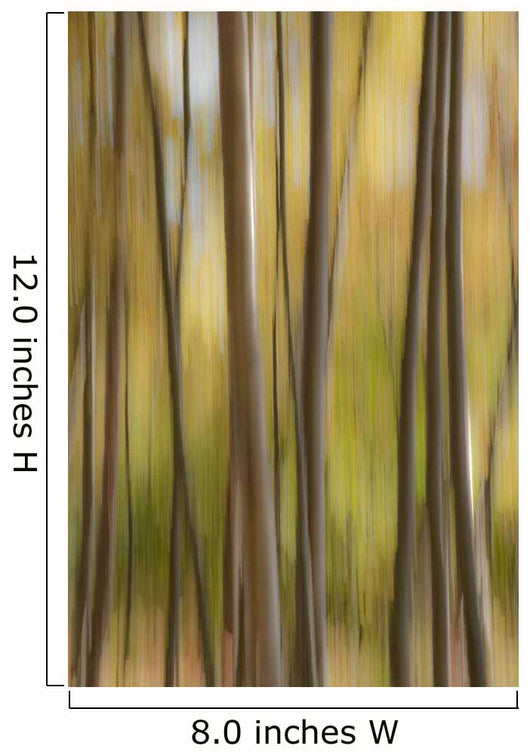 Abstract Of Birch Trees And Fall Colors, Alaska Wall Mural