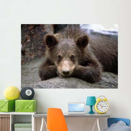 Grizzly Bear Cub Laying Wall Mural