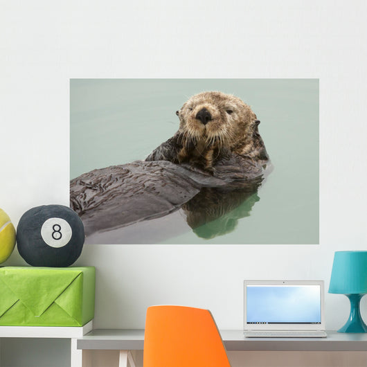 An Adult Sea Otter Floats Wall Mural
