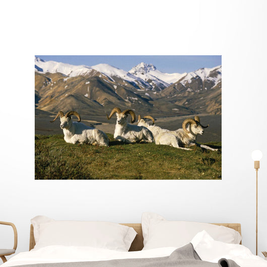 Group Of Dall Sheep Rams On Ridge Polychrome Pass Wall Mural
