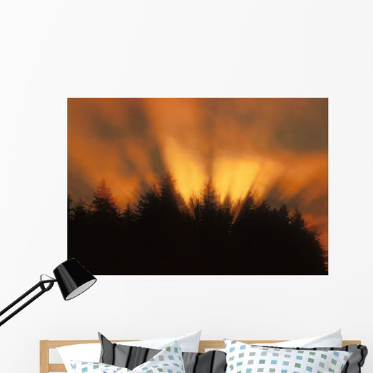 Sunrise Fog Trees Tongass Natl Forest Juneau Southeast Alaska Orange Wall Mural