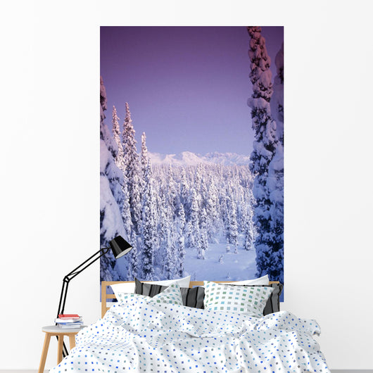 Snow Covered Spruce Trees Ak Range Int Ak Winter Wall Mural