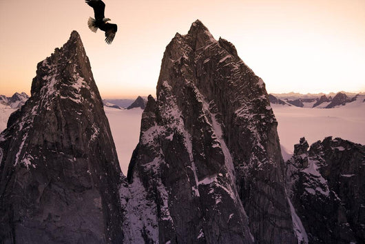 Bald Eagle Flying Past Taku Towers On The Juneau Ice Field At Sunset Wall Mural