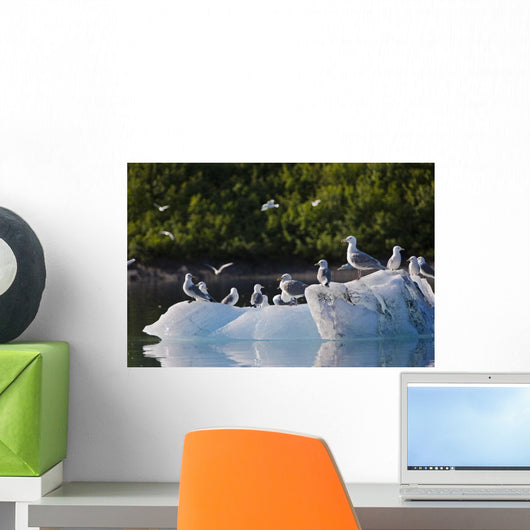 Kittiwakes And Seagulls Sitting On An Ice Berg Wall Mural