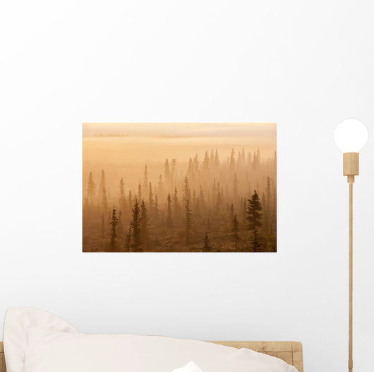 Sunrise Over A Foggy Forest Wall Mural