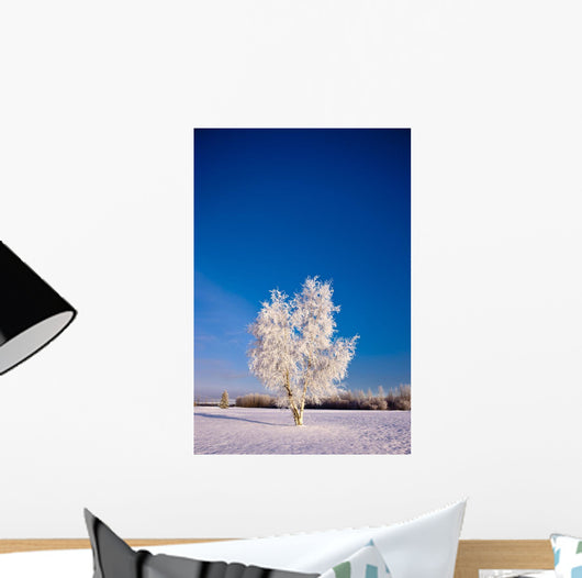 Hoarfrost Covered Birch Tree, Winter, Interior Alaska Wall Mural