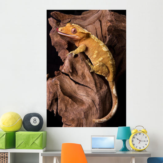 Crested gecko on petrified wood Wall Mural