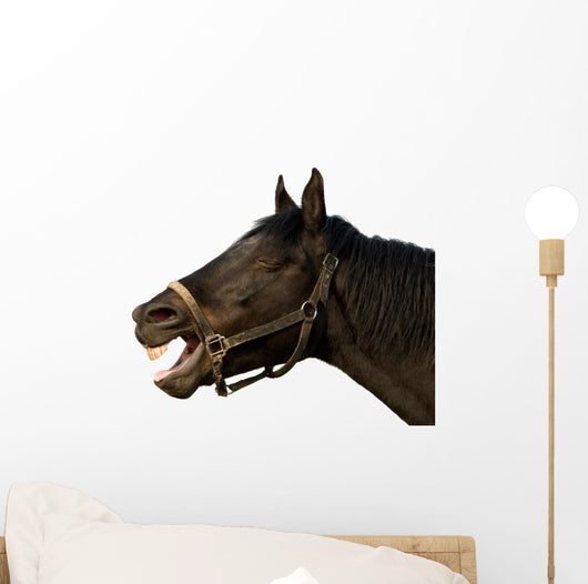 Head of a horse on the isolated background Wall Decal