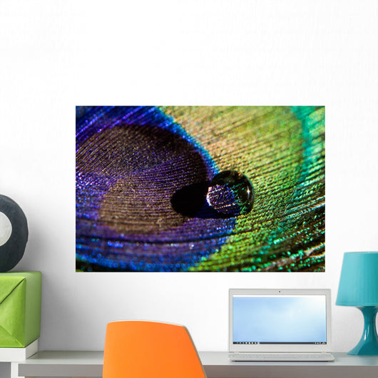 Water Drop on Peacock Feather Wall Mural