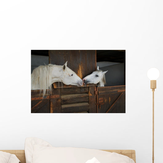 Two Horses Kissing Wall Mural