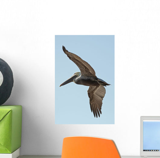 A bird in flight;Gulf shores alabama united states of america Wall Mural