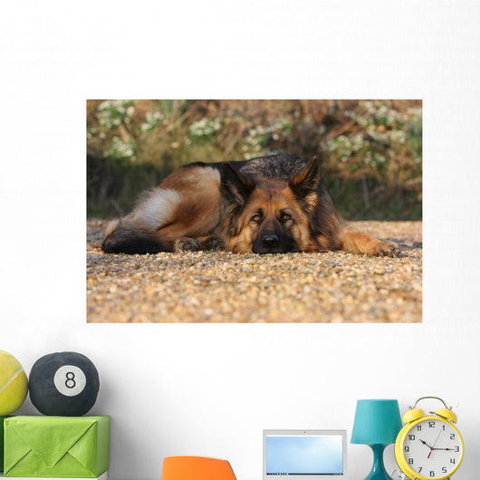 German Shepherd Dog Wall Mural