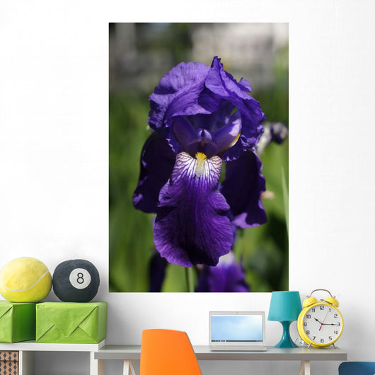 Flower Irises Wall Mural