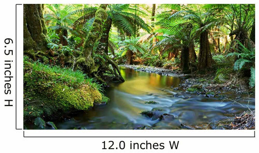 rainforest river panorama Wall Mural