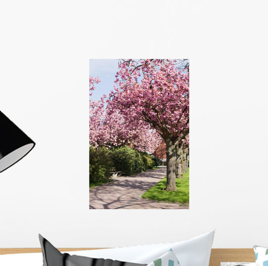 Blossoming cherry trees Wall Mural