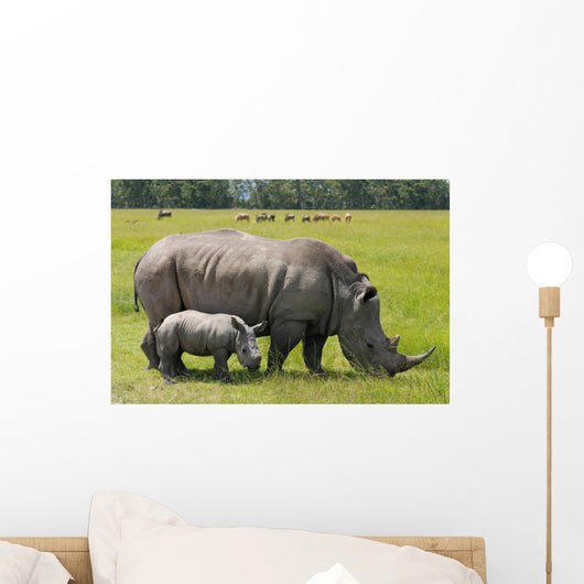 white rhinoceros with 2 weeks calf Wall Mural