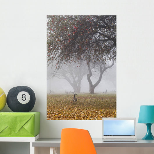 Canada geese sheltering under apple trees on a misty autumn morning Wall Mural