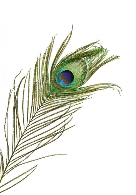 Peacock Feather Wall Decal