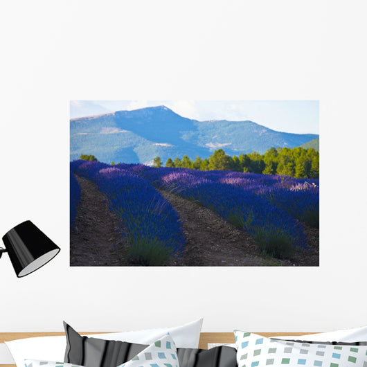 Blooming field of Lavender around Sault and Aurel Wall Mural