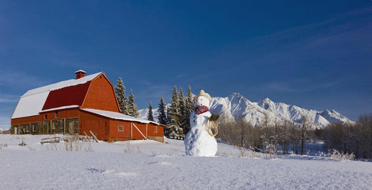 Snowman Dressed Up As A Cowboy Standing In Front Of A Vintage Red Barn Wall Mural