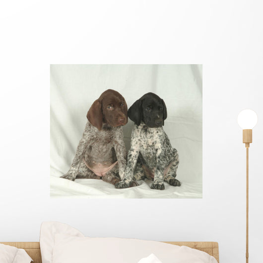 Bracco GERMAN KURZHHAR, PUPPIES Wall Mural
