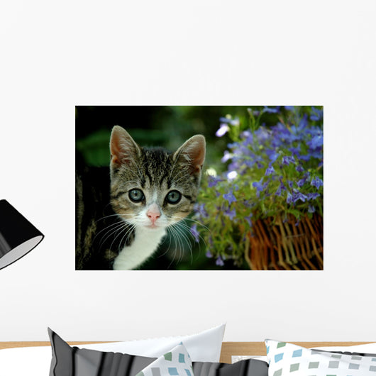 Small Kitten With Flowers Wall Mural