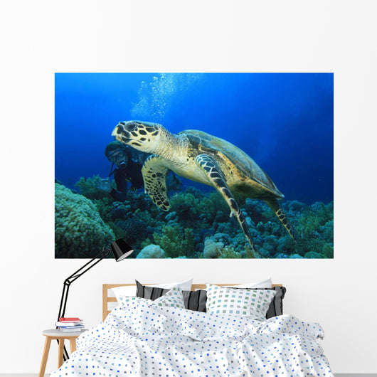 Hawksbill Turtle with Scuba