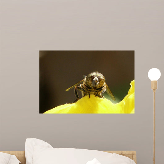 Abeille De Face Wall Mural
