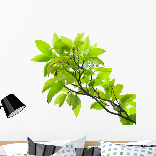Leaves of mango tree Wall Mural