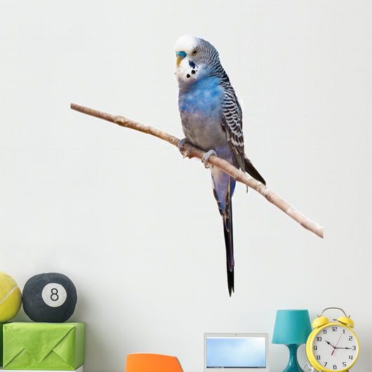 Little Budgie Parrot Wall Decal