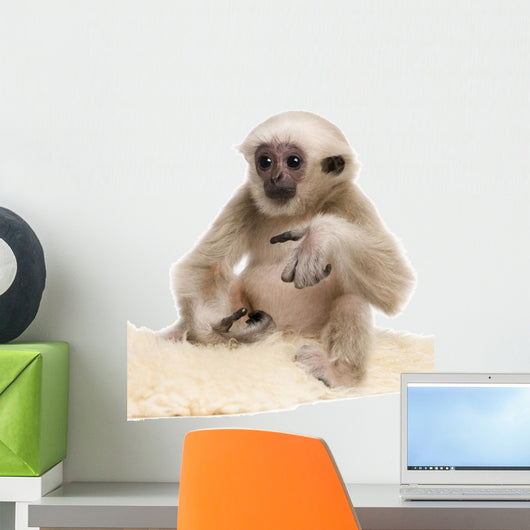 Young Pileated Gibbon Wall Decal