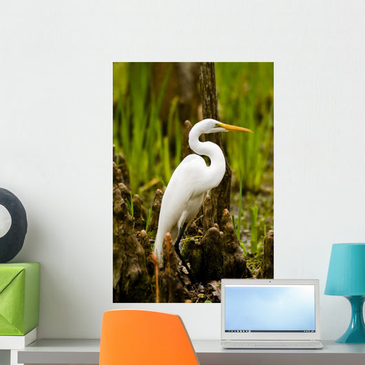 Snowy Egret and Cypress Wall Mural