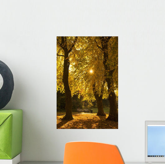 Sunlight glowing through the leaves of trees Wall Mural
