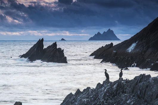 Cormorants on the rocks;Iveragh peninsula, county kerry, ireland Wall Mural