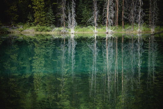 Trees reflected in the blue-green water of a small spring fed pond Wall Mural