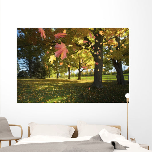 Autumn Leaves Blowing In The Breeze In Gatineau Hills Wall Mural