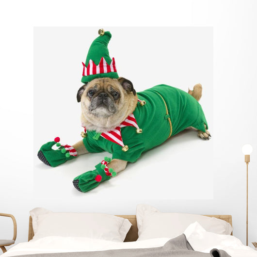 A pug in a christmas elf costume;St albert, alberta, canada Wall Mural
