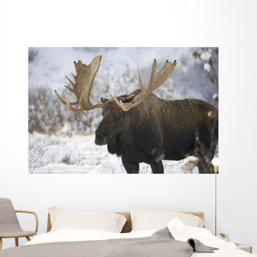 Bull moose in the chugach mountains;Alaska, united states of america Wall Mural