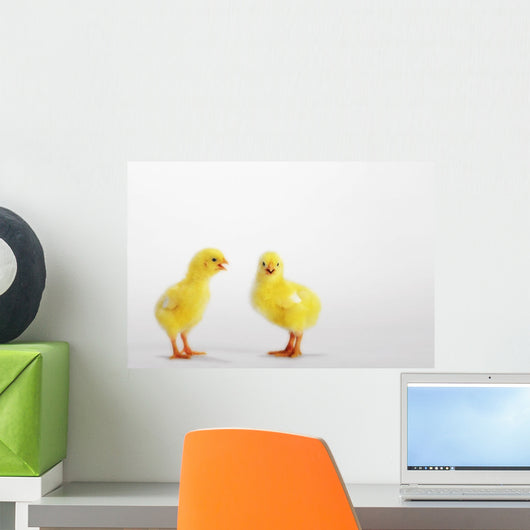 Two yellow baby chicks chirping;British columbia canada Wall Mural