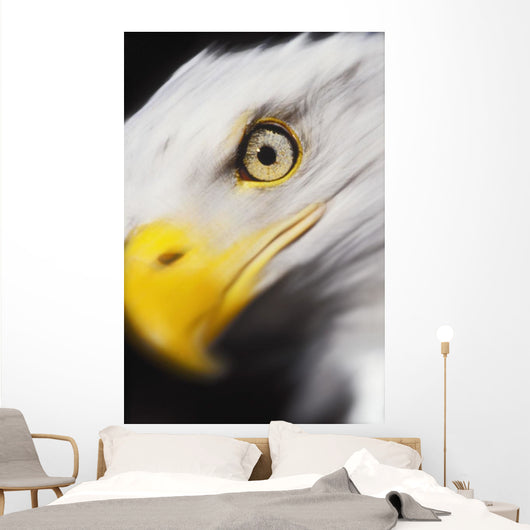 Close up of a bald eagle's face;British columbia canada Wall Mural