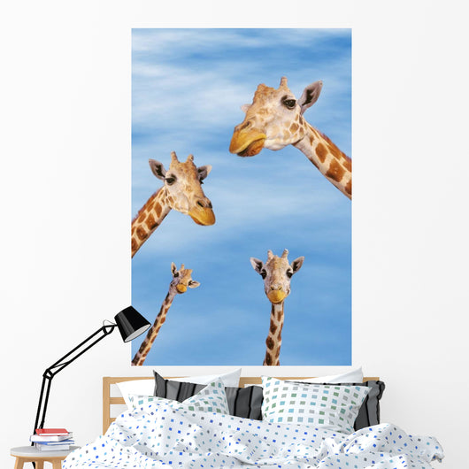 Four giraffes looking downward;Africa Wall Mural
