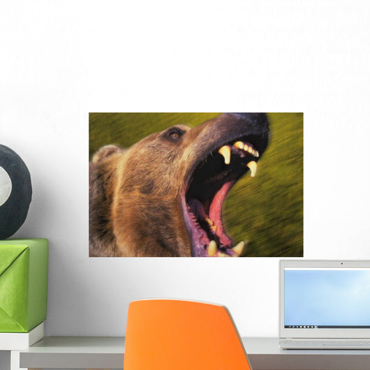 Roaring grizzly bear's face rocky mountains;United states of america Wall Mural