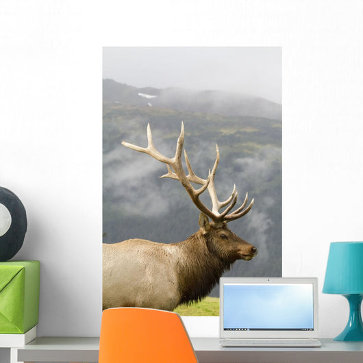 Portrait Of Captive Mature Rocky Mountain Bull Elk Wall Mural
