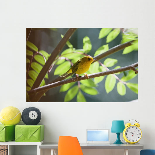 Female Wilson's Warbler Perched On Mountain Ash Branch Wall Mural