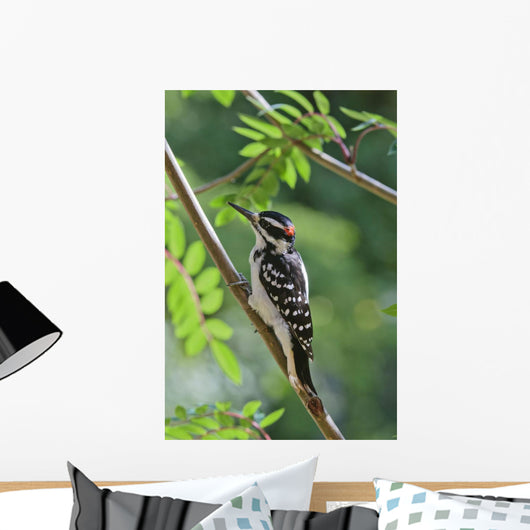 Male Hairy Woodpecker Perched On Mountain Ash Tree Wall Mural