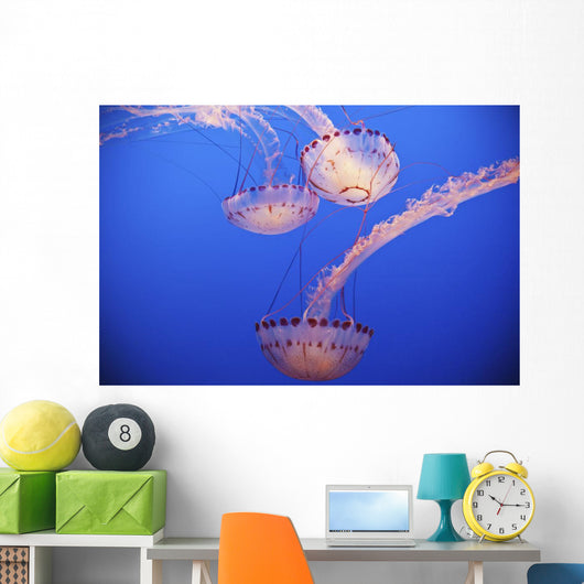 Jellyfish In Aquarium Wall Mural