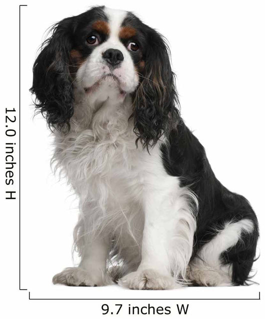 Cavalier King Charles Spaniel Wall Decal