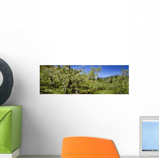 Agriculture - Apple orchard Wall Mural